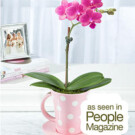 Teacup Orchid – $31.98